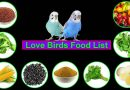 Love Birds Food || Lovebirds Food List