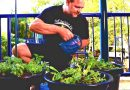 How to Grow Organic Food in Containers
