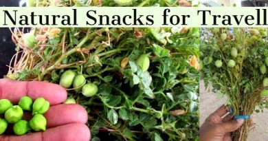Channa Dal – Natural organic Snacks for Travell